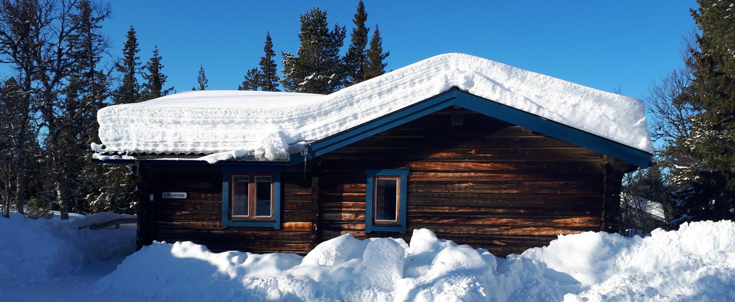 Fjällripan (The Snow Grouse)